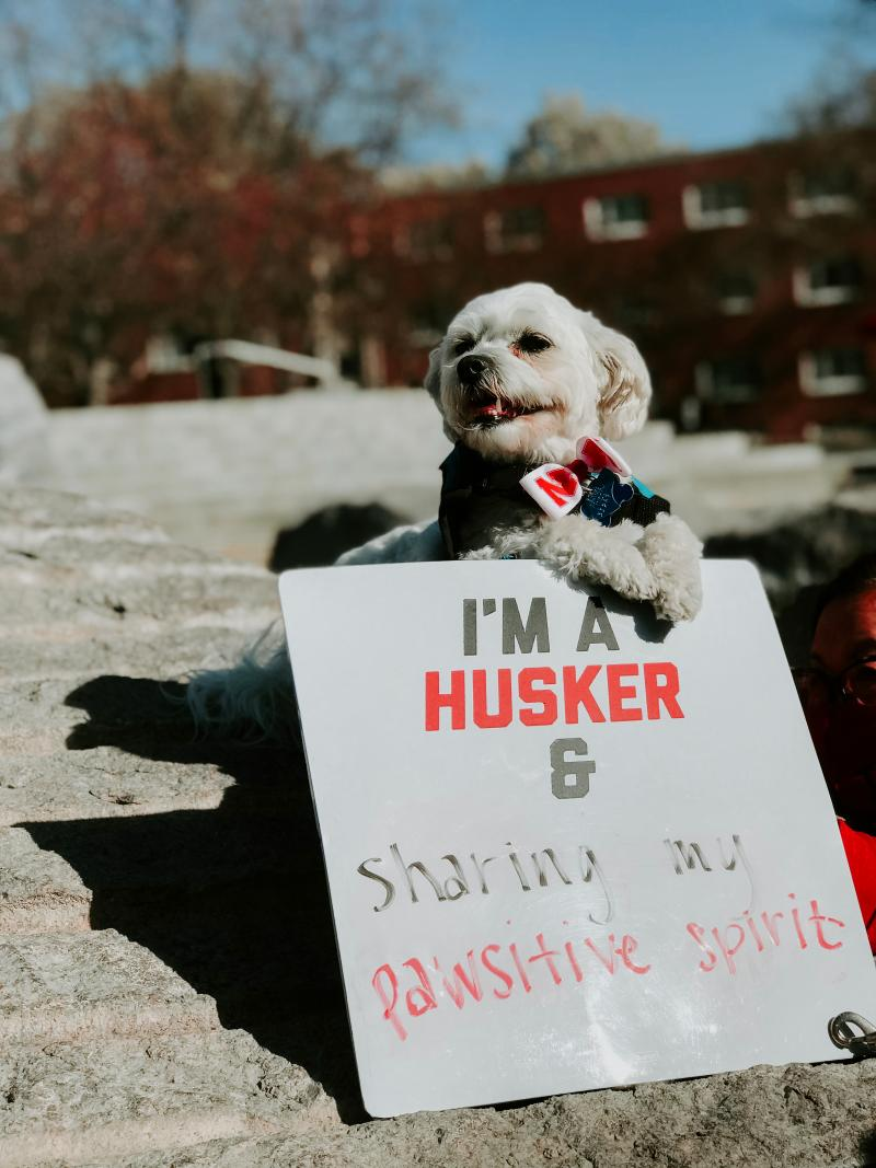 """Neo holding a sign that says """"I'm a Husker and sharing my pawsitive spirit."""""""